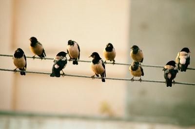 Photo by Ridham Nagralawala