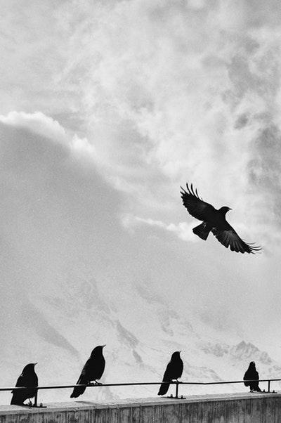 Photo by Samuel Zeller